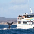 Whale Watching at Whitsunday Island