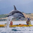 Kayaks with Dolphins