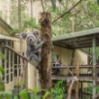 Daisy Hill Koala Center
