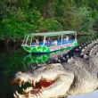 The Crocodile Express
