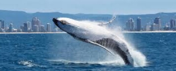 whale watching & canal cruise