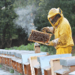 Professional Live Bee Shows at Superbee Honeyworld